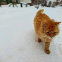 Вета, 17 лет, Женщина, Томск, Россия